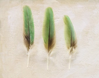 Green Home Decor, Feather Wall Art, Brown Nature Photograph, Neutral Photography, Natural Still Life