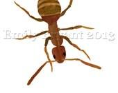 Archival Print 8X10 Art Print Invasive Species Emerald Ash Borer, Japanese Beetle and Torpedo Bug