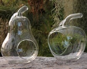 """Apple and Pear Tabletop Terrariums- Set of 2 for Tillandsias """"Airplants"""", Ferns, Succulents"""