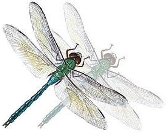 Gift Certificate Fifty Dollars to GeminiDragonfly