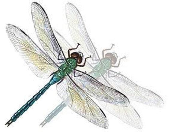 Gift Certificate One-Hundred Dollars to GeminiDragonfly