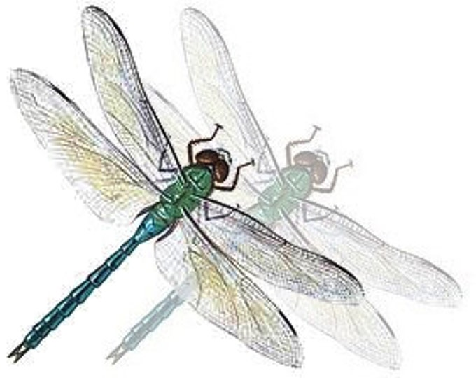 Gift Certificate One-Hundred Dollars to GeminiDragonfly