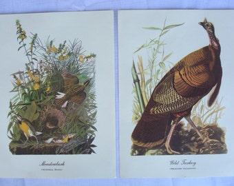 Audubon Best Loved Bird Paintings (Set 2) Color Prints. Wild Turkey, Meadowlark