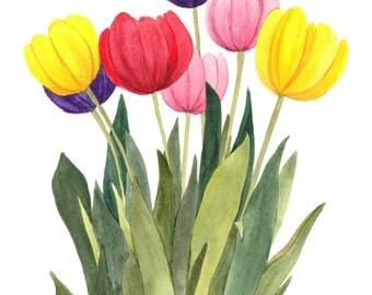 Multi Colored Tulips Original Watercolor by Wanda Zuchowski-Schick