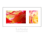 Frilly Rose Petals Photo Duet, Fuchsia Pink, Butter Yellow, Ruby Red, Nature Photography, Garden Art, Feminine, For Her