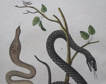 Antique Handcolored Print 1799 Bertuch Snakes From the Book Wonders of the World