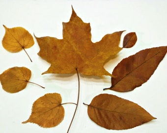 Rustic Home Decor - Real Autumn Fall Leaves for Woodland Wedding Decor- Botanical Floral Decor - 80+ Leaves