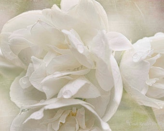 "Mock Orange ""Snow White Sensation"", Fine Art Photography, Flower Photography, Floral Photography, Botanical Photography"