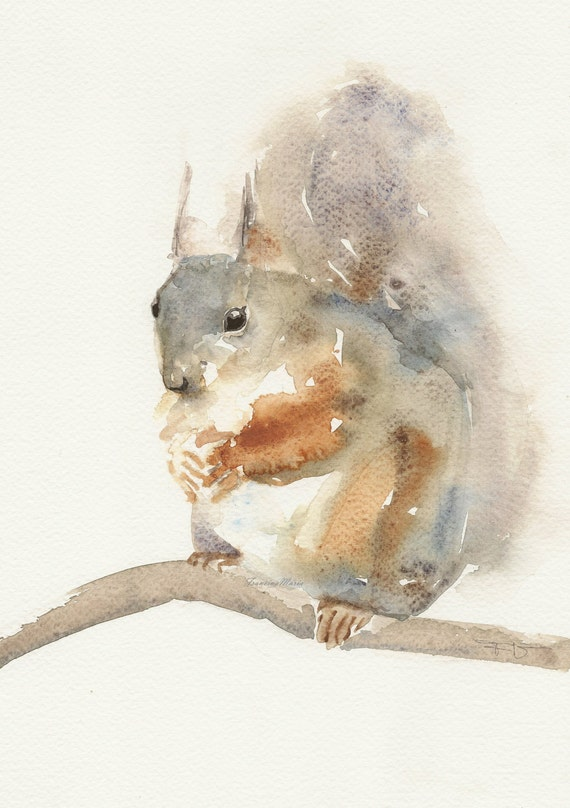 Squirrel , Animal Art, print watercolor painting, watercolor paintings print art.