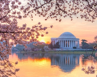 Cherry Blossom Festival Photo - Washington DC Print - Jefferson Memorial Photo - Washington DC Art - Sunrise, Cherry Blossoms