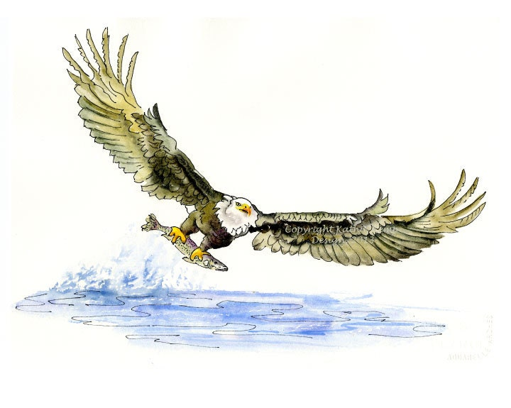 Eagle Catching Fish Drawing Bald Eagle Birds Pen a...