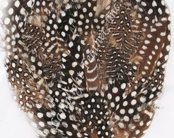 2 Guinea Feather Pads