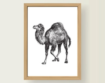 Safari Animal Camel Nursery Art Decor A3 Print