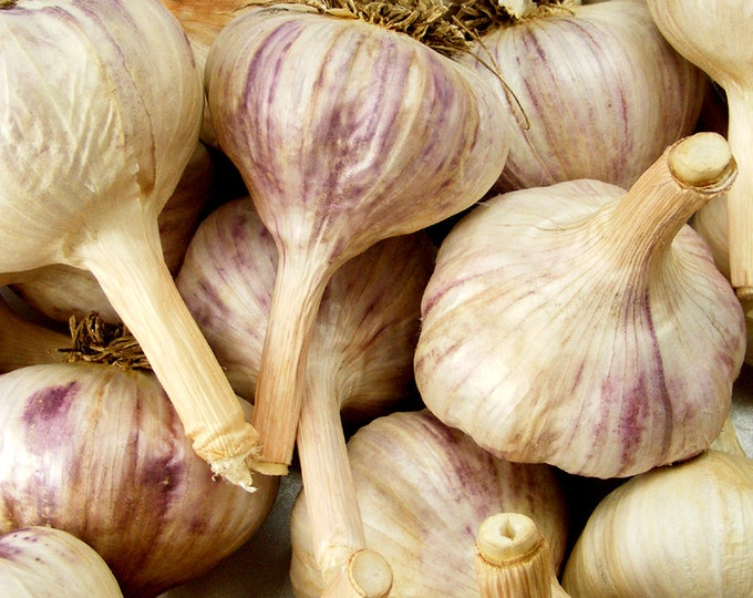 German Red Garlic Bulbs Organic Grown Gourmet - 1 lb. For Planting or Cooking Cold Hardy Variety Fall Shipping