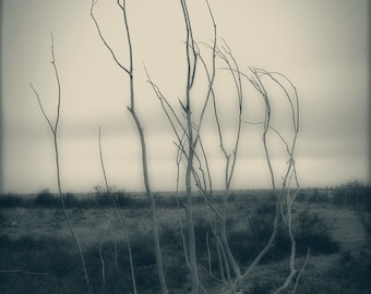 Remains of a Black Willow Tree - Nature Photograph - Tree Art Print - Tree Wall Decor