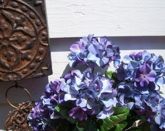 3 Purple Blue Hydrangea Bushes