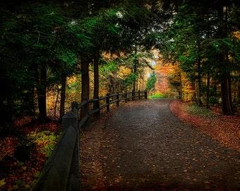 Michigan Photography, Nature Photography, Nature Wall Art, Forest, Trees, Fine Art Prints, Fall in MI,Tahquamenon Art,  Woodland Prints, Art