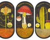 All three Plant Anatomy Art Prints DEAL
