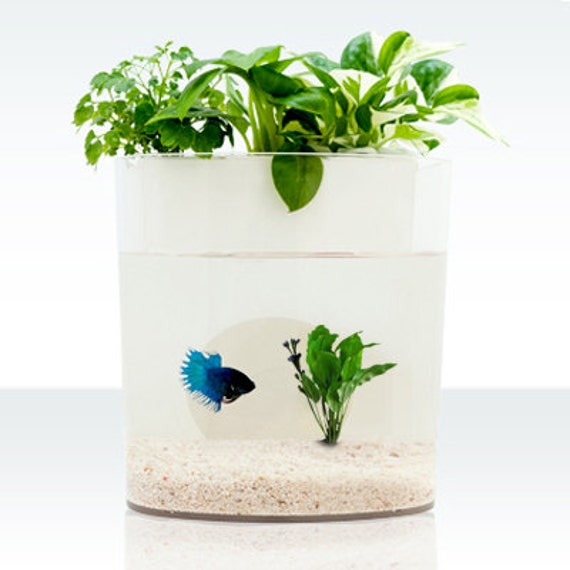 A dialogue between flowers and fish aquarium planter by for Fish tank planter