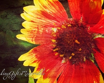 Artistic Orange and Red Flower Photograph That Can Be Personalized