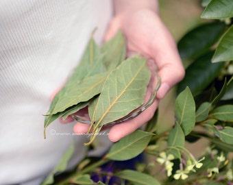 Bay Leaves Dried, Daphne dried leaves, Laurus Nobilis, organic bay leafs, Apollo's tree, Cooking herbs, Laurel tree 15gr