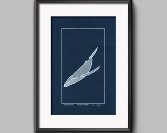 Megaptera novaeangliae. Original screenprint. Humpback whale