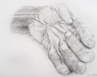 Hand of Orangutan - archival print from original drawing