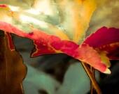 Macro Photo Print, Flower Photography, Red Orange Nature Print, Leaf Art Print, Leaf Photo, Green Yellow, Nasturtium by Paula DiLeo_82014