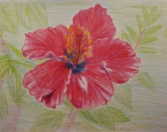 Hibiscus drawing in color pencil