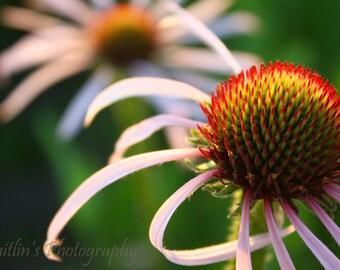 McFarland Park Prairie Flower