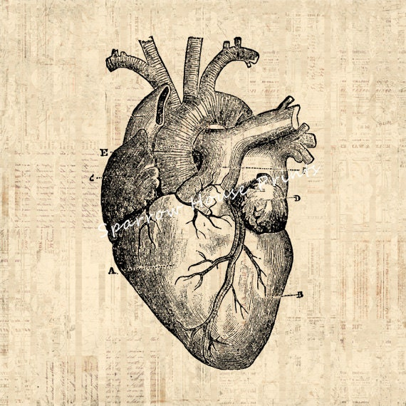 Heart Diagram Art Antique Wall Art Medical Anatomy Home ...