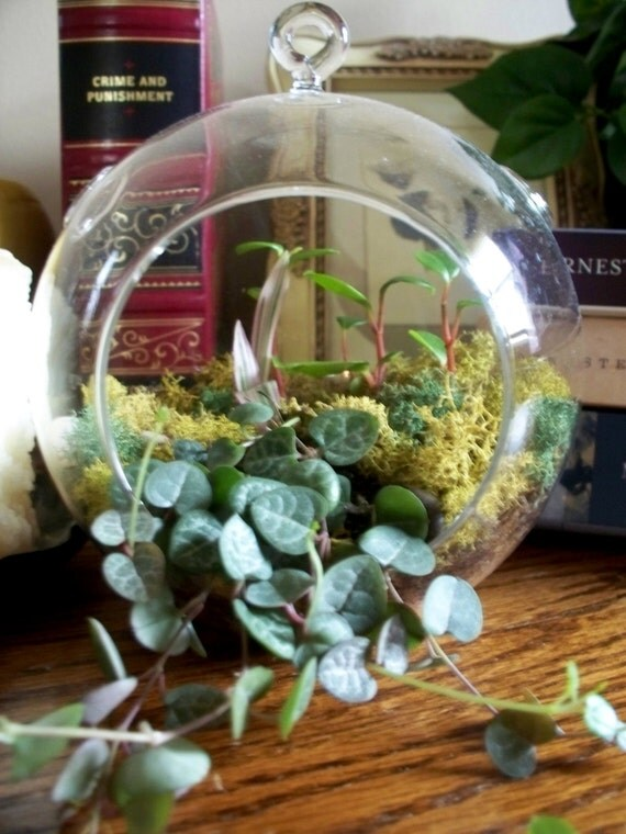 items similar to diy miniature fairy garden round hanging glass globe terrarium kit choose. Black Bedroom Furniture Sets. Home Design Ideas