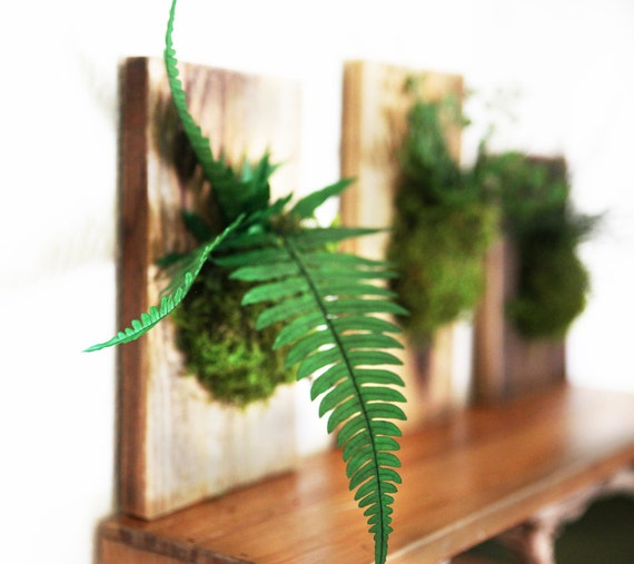 ... and Moss Hanging Rustic Wood Flat - Care Free, Real Preserved Plant