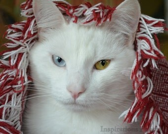 Red Riding Cat 8 x 10