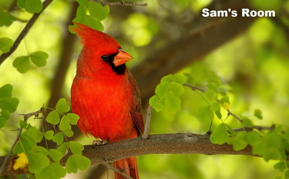 Items Similar To Red Cardinal Bird Personalized Poster