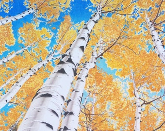 Spectacular aspen trees illustrated in colored pencils