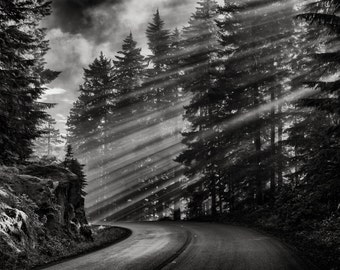 Landscape Photography, Sunbeams, Mountain Road, Pine Trees, Fall, Mount Rainier, Fine Art Black and White Photography, Wall Art, Home Decor