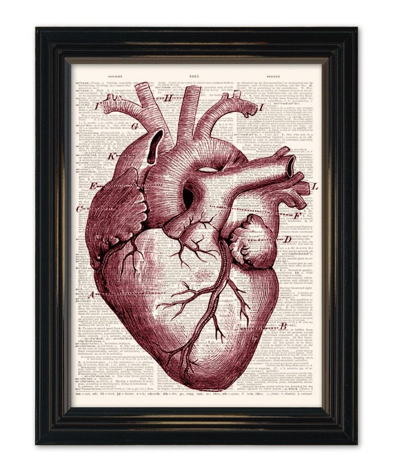 Heart Dictionary art print Medical Anatomy Heart Diagram