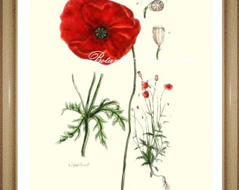 "Poppy Print. #2 Wildflower print.  Poppies. Red Flower Print. 8x10"""