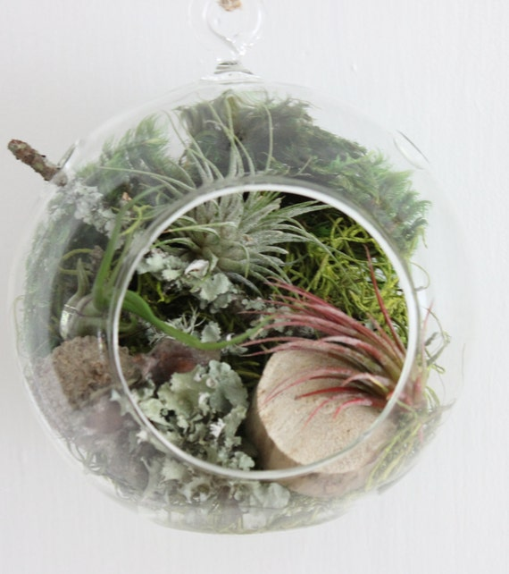 air plante terrarium tillandsia suspendu plante cadeau de. Black Bedroom Furniture Sets. Home Design Ideas