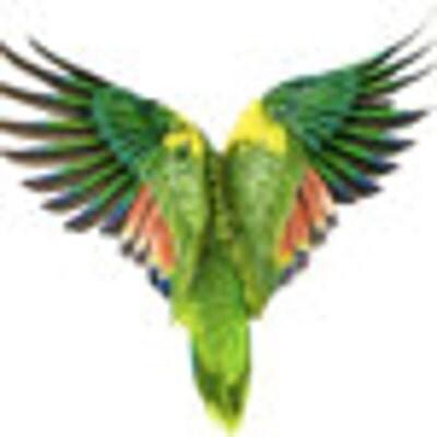 birdzonawire