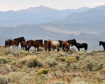 Wild mustangs, Mustangs, Horses, Wild Horses