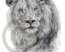African Lion pencil drawing print - A4 size - artwork signed by artist Gary Tymon - Ltd Ed 50 prints only - pencil portrait
