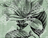 Digital Download Magnolia Flower Floral Botanical image, Antique Illustration, digi stamp, digis, digital stamp, Elegant, and beautiful
