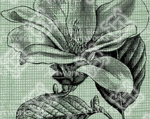 Digital Download Magnolia Flower Floral Botanical image, Antique Illustration, digi stamp, digis, digital stamp, Elegant, and beautiful