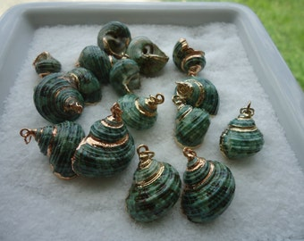Wedding Set of 16 Gold Trim Green Turbo Seashell Pendants