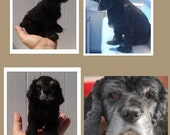 Pet Memorials Custom needle felted Dog sculpture portrait Cocker Spaniel or any breed of Dog