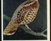 1970s Vintage Postcard of an A.N. Komarov Bird vintage postcard, SharonFosterVintage