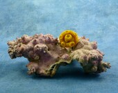 Sunshine Tentacle Pin - Polymer Clay Sea Life Jewelry