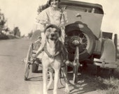 Woman Rides in CART PULLED By Large DOG Photo Circa 1930s